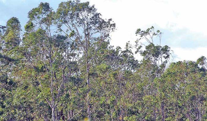 Minas supera 2 mi de hectares e se consolida como maior base florestal plantada do País