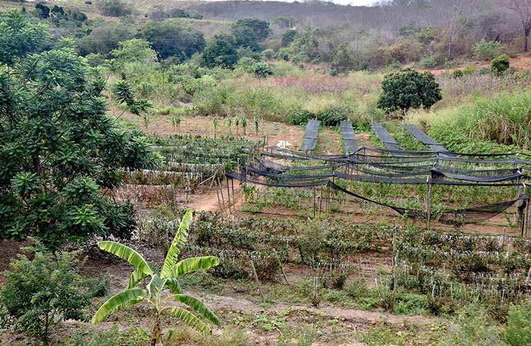 Estado une esforços por produtor rural