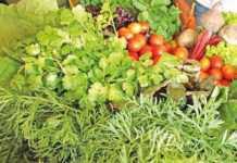 Preconceito após tragédia traz perdas a produtores de hortaliças