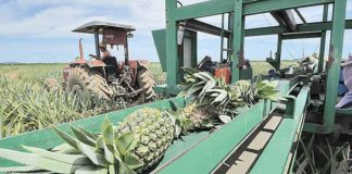 Estudo aponta mercado favorável à fruta