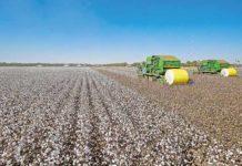 BB vai destinar R$ 15 bilhões para pré-custeio de safra
