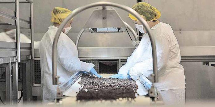 Bauducco aumenta produção de colombas
