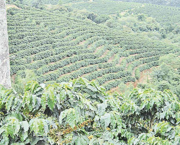 Agronegócio de Minas deve ter alta de 8,5% no VBP de 2020