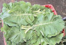 Hortaliças ficam até 90% mais caras no Estado