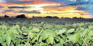 Safra de grãos deve aumentar 0,6% e bater recorde no Estado