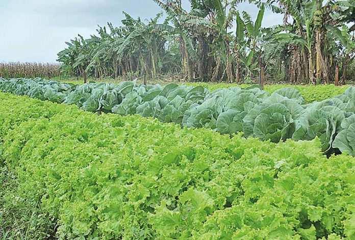 Tragédia de Brumadinho prejudica produtores de hortaliças da região