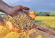 Governo do Paraná estima produção recorde