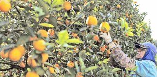 Estoques de suco do Brasil têm alta de 41,8%
