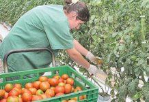 Preços das hortaliças avançam no Brasil após chuvas acima da média