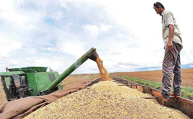 máquina recolhe grãos de milho e despeja em caminhão