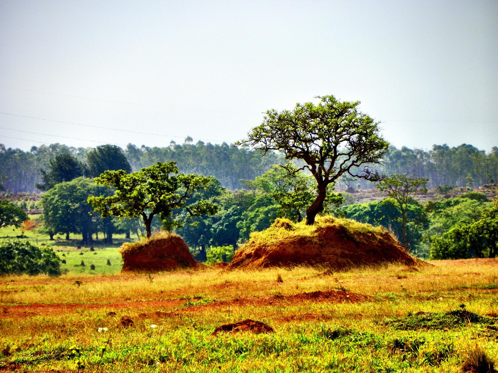 Projeto Biomas Tropicais - Cerrado