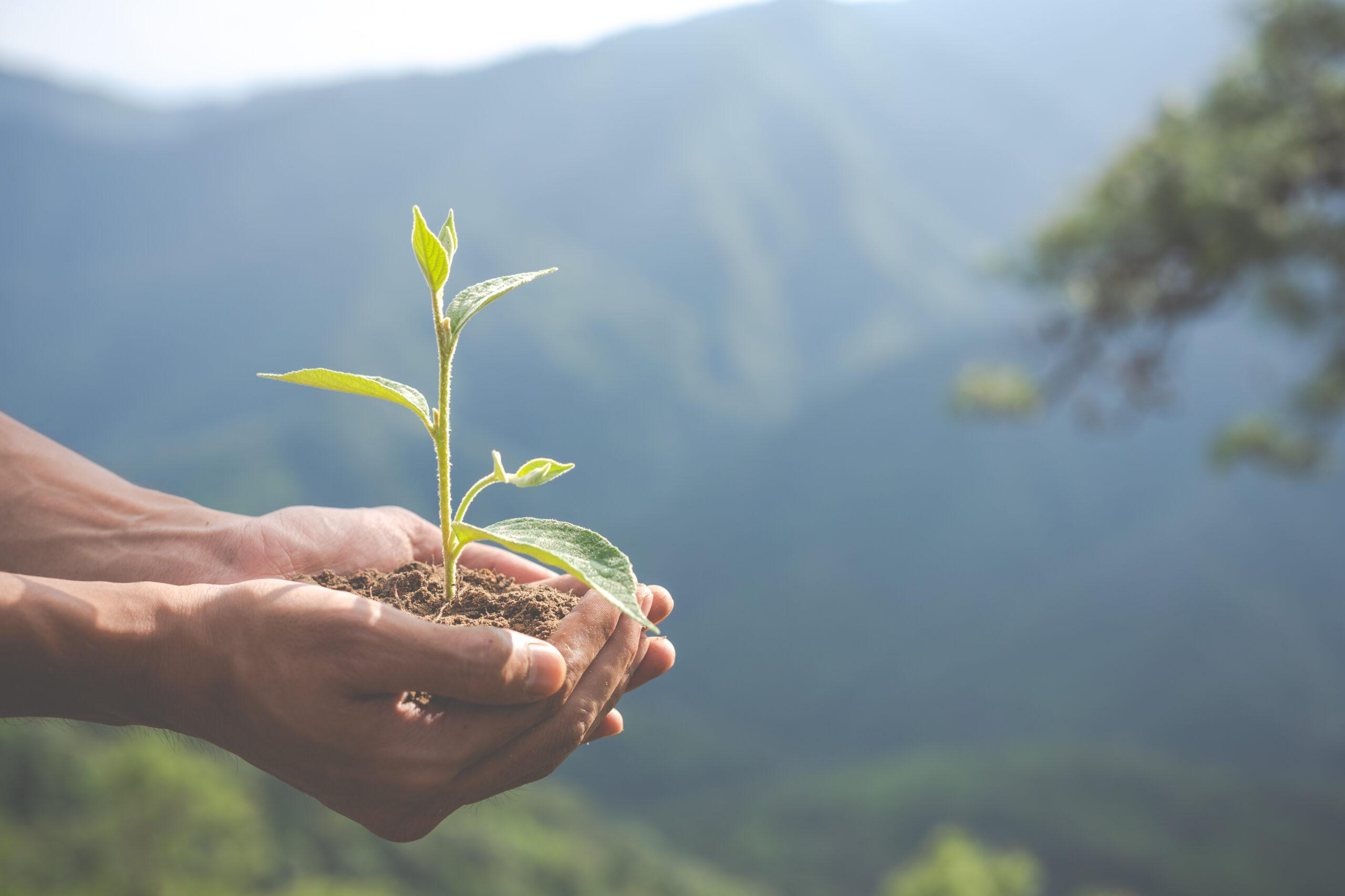 Mãos segurando uma planta