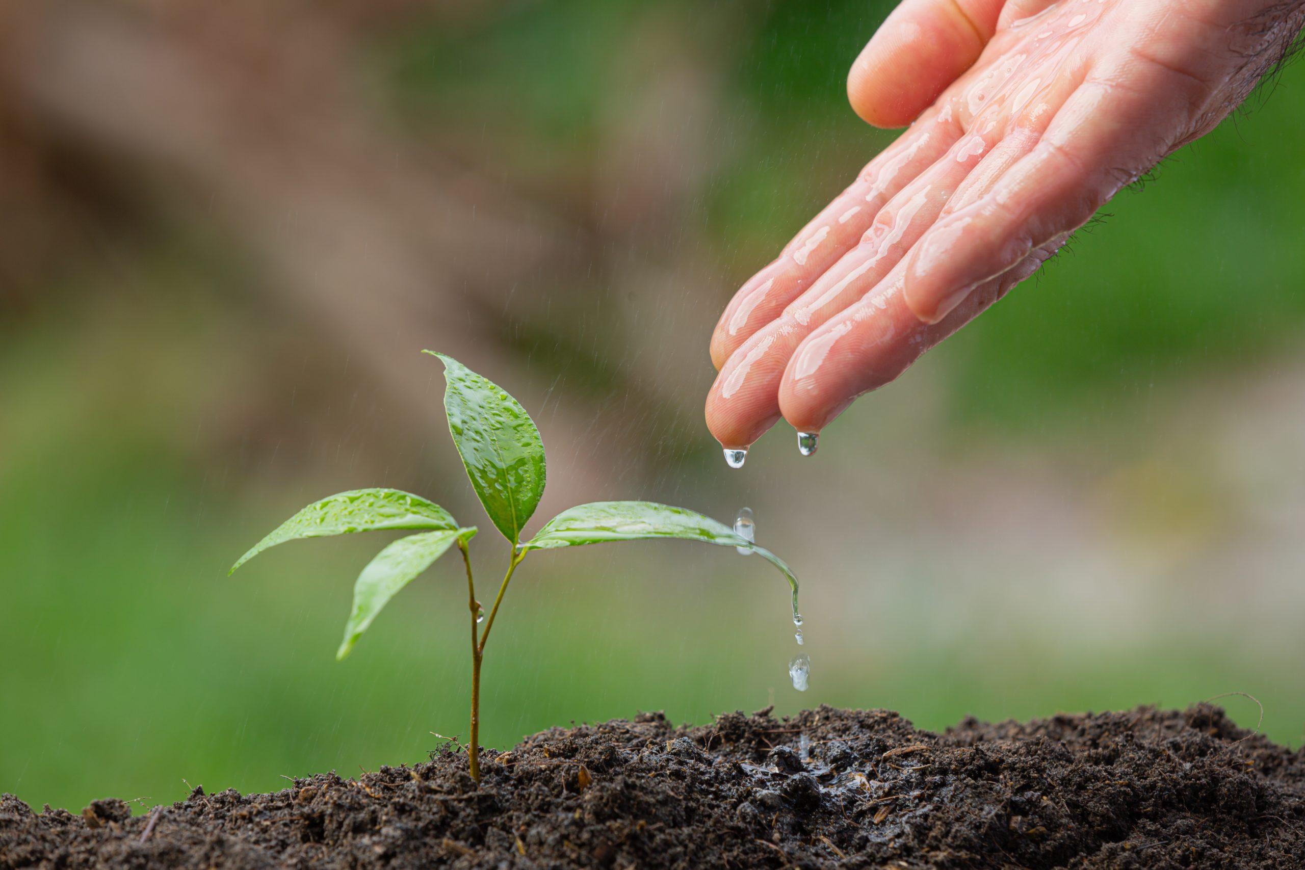 Foto de mão regando muda de planta
