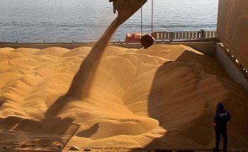 Os embarques de soja de Minas Gerais renderam US$ 2,03 bilhões entre janeiro e setembro | Foto: Fabio Scremin/APPA