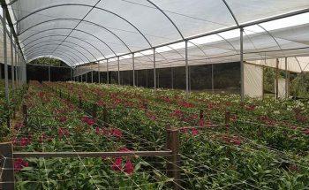 Estimulados pela demanda, os produtores de flores investem para aumentar plantios | Crédito: Divulgação