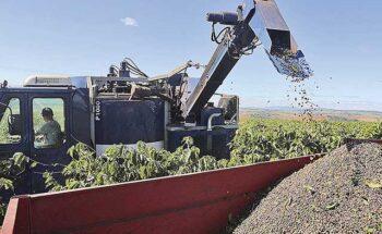 Com 95% da colheita efetuada, a safra mineira de café de 2021 é estimada em 21,4 milhões de sacas de 60 quilos   Crédito: Amanda Perobelli/Reuters