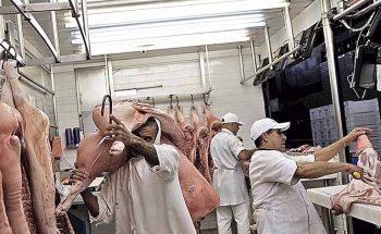 Quilo do suíno vivo em Minas está cotado a R$ 7,50; consumo é estimulado pela SNCS | Crédito: Nacho Doce/Reuters