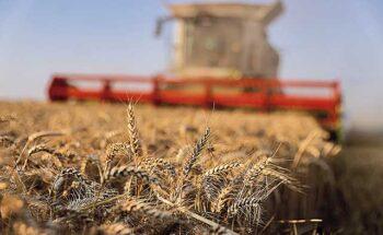Abitrigo estima que as importações do cereal podem ficar em aproximadamente 5 milhões de toneladas | Crédito: REUTERS/Pascal Rossignol